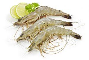 Shrimp - With Head